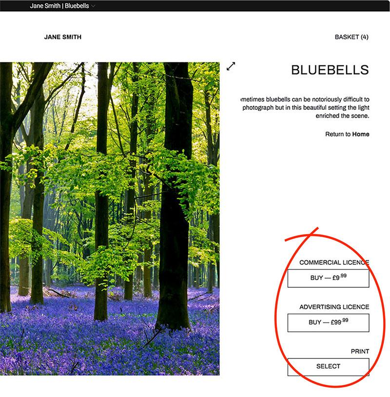 Bluebells circled